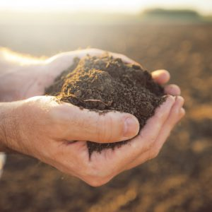 Spulchnianie gleby